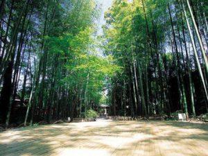竹林の小径【修善寺・遊歩道】